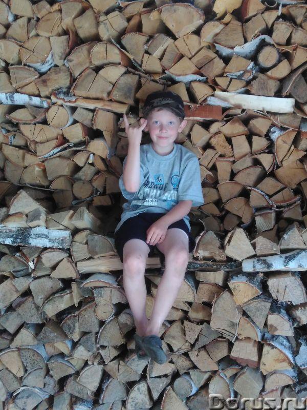 Дрова березовые - Лес и древесина - Дрова колотые и в чурках, размер можем напилить любой, 4 куба 55..., фото 1